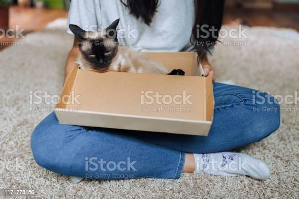 Sleepy siamese cat is resting in a cardboard box next to the mistress picture id1171778156?b=1&k=6&m=1171778156&s=612x612&h=e8vi23dverodedcbvzbr5vaonugzernujm6tkfgr6oa=