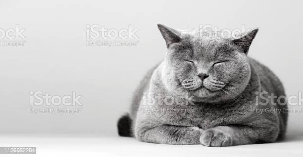 Sleepy smiling cat laying on the floor picture id1126662264?b=1&k=6&m=1126662264&s=612x612&h=sprlb km4kzdaczwrssc8lrlx6gj3ky1 hwwsepns8m=
