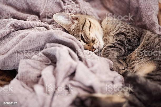 Sleepy time picture id188016147?b=1&k=6&m=188016147&s=612x612&h=dbijcetxbmdrrt7r7tstq46ujr2muhygksyd6o2cmge=