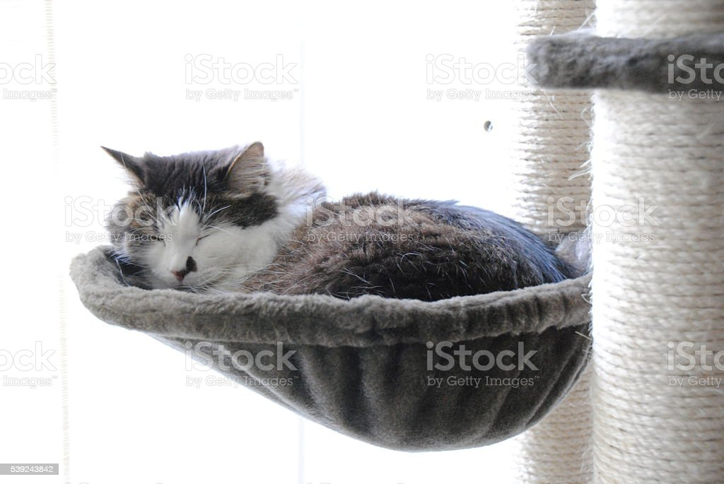 Sleepy times royalty-free stock photo