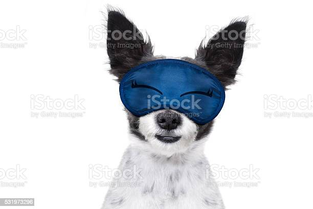 Sleepyhead baby dog picture id531973296?b=1&k=6&m=531973296&s=612x612&h=mdy5hkse iesucwg2an5b rrleg9lzpbv6uelbpkmj4=
