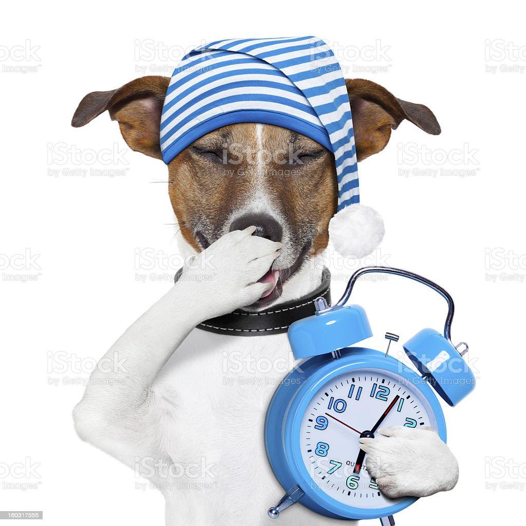 sleepyhead chien Fatigué - Photo