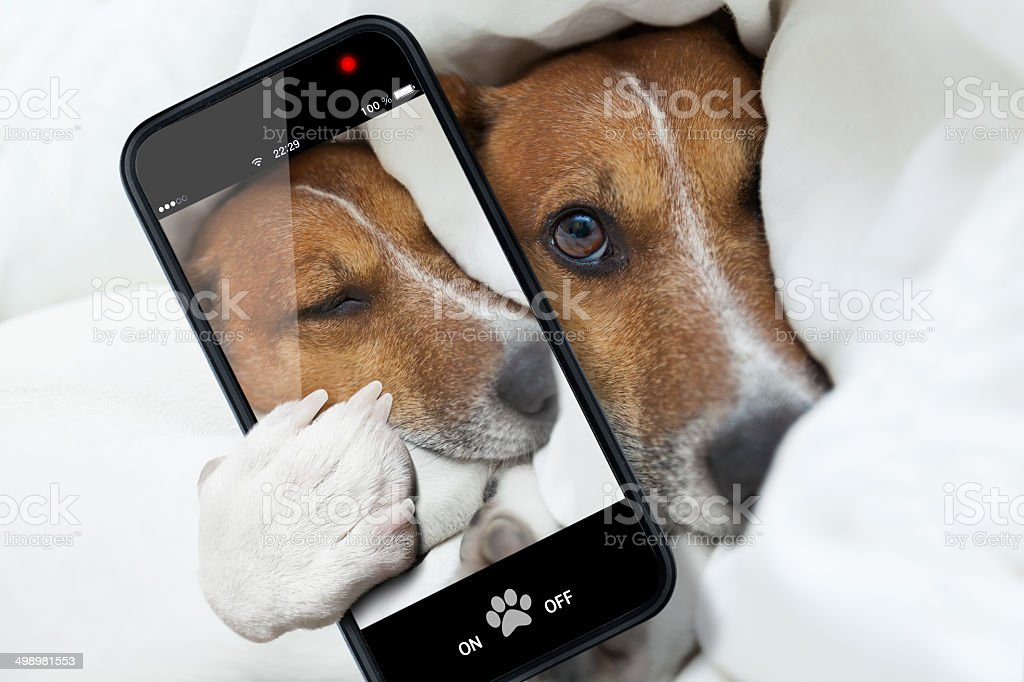 sleepyhead selfie dog stock photo
