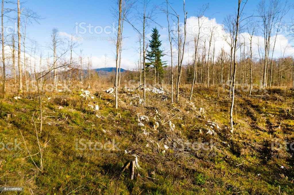 Schneeregen verwüsteten Wald – Foto