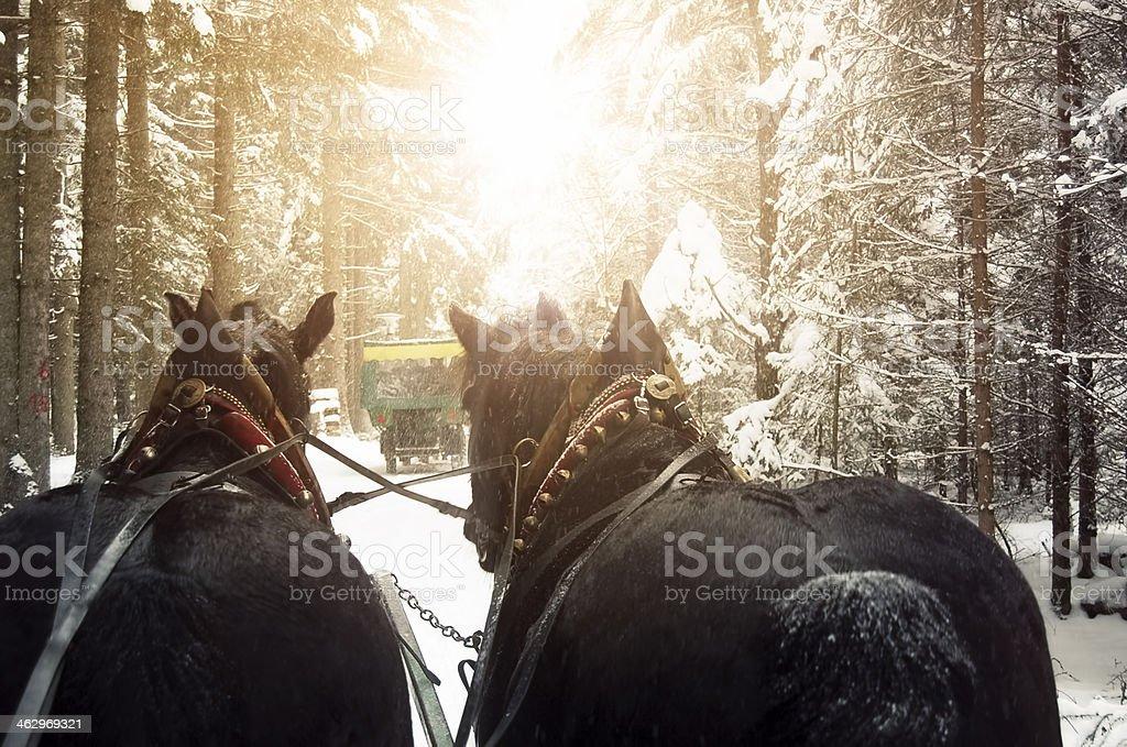 Sleigh horses royalty-free stock photo