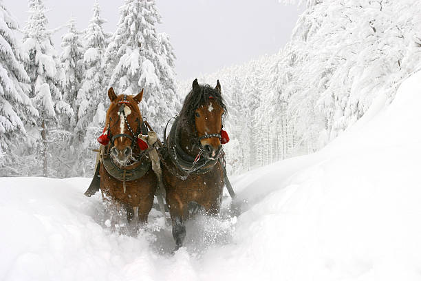 Sleigh ride Sleigh ride sleigh stock pictures, royalty-free photos & images