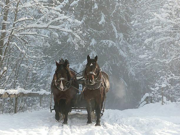 sleigh ride. - pferdekutsche stock-fotos und bilder