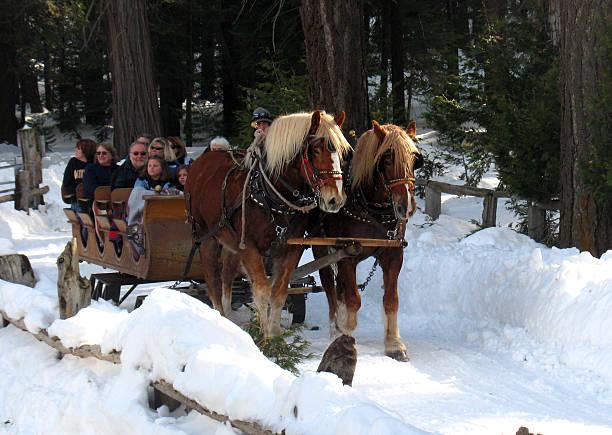 sleigh ride - lake tahoe winter stock-fotos und bilder