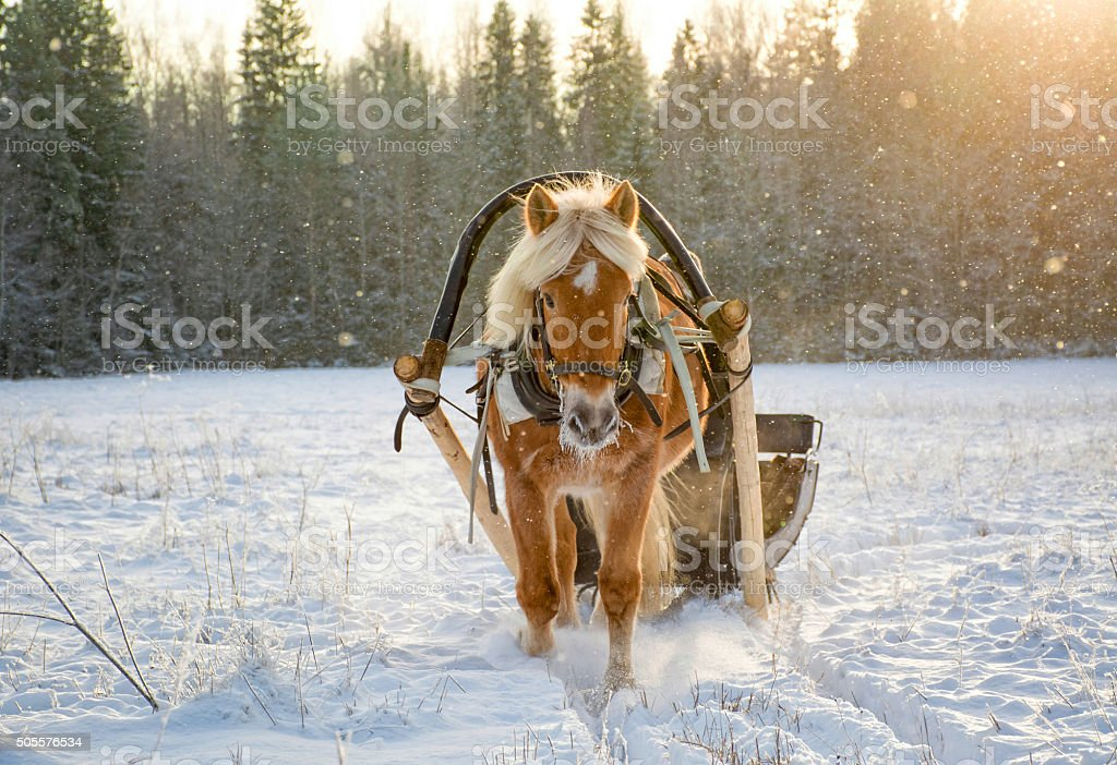 Sleigh ride with horse stock photo
