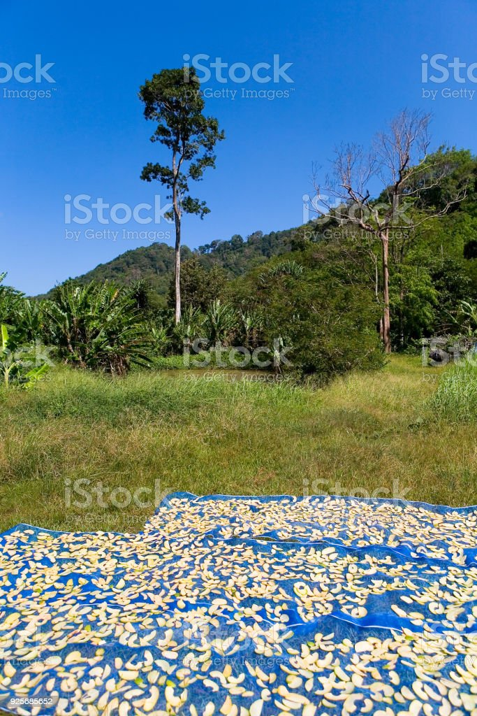 Sliced exotic fruits dry under the sun. stock photo