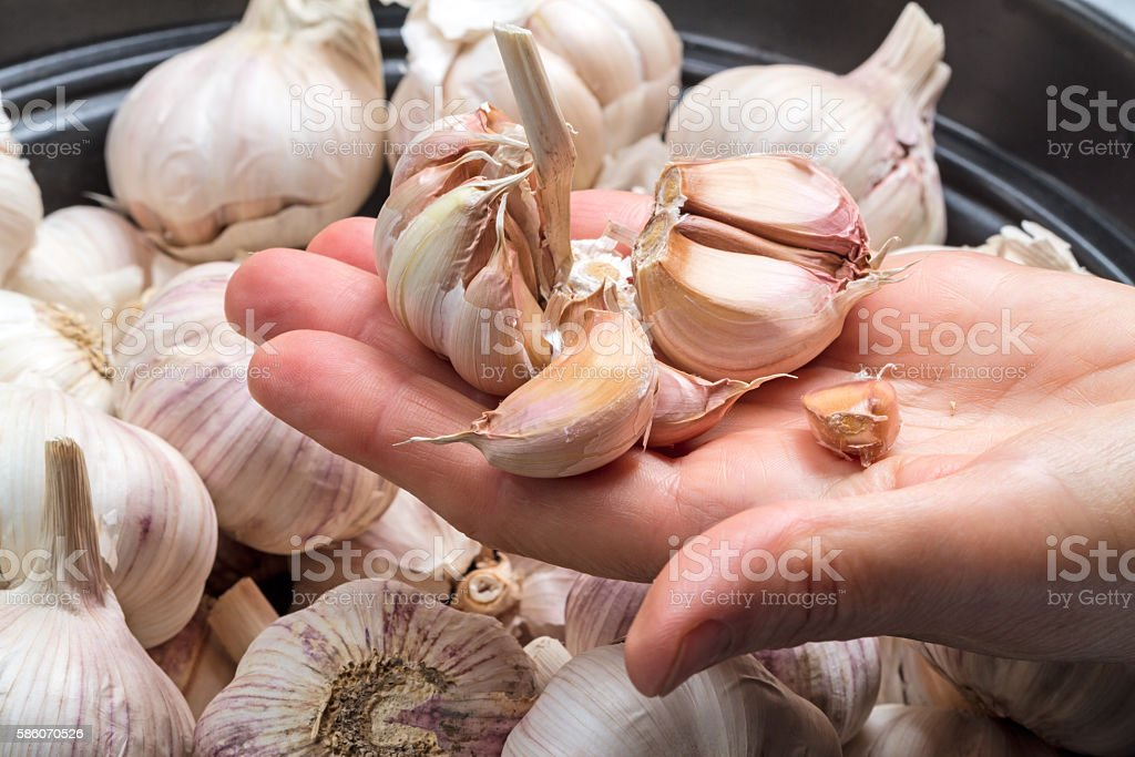 Slices of garlic on a palm stock photo