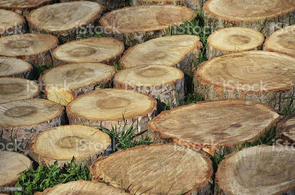 slices of wood royalty-free stock photo