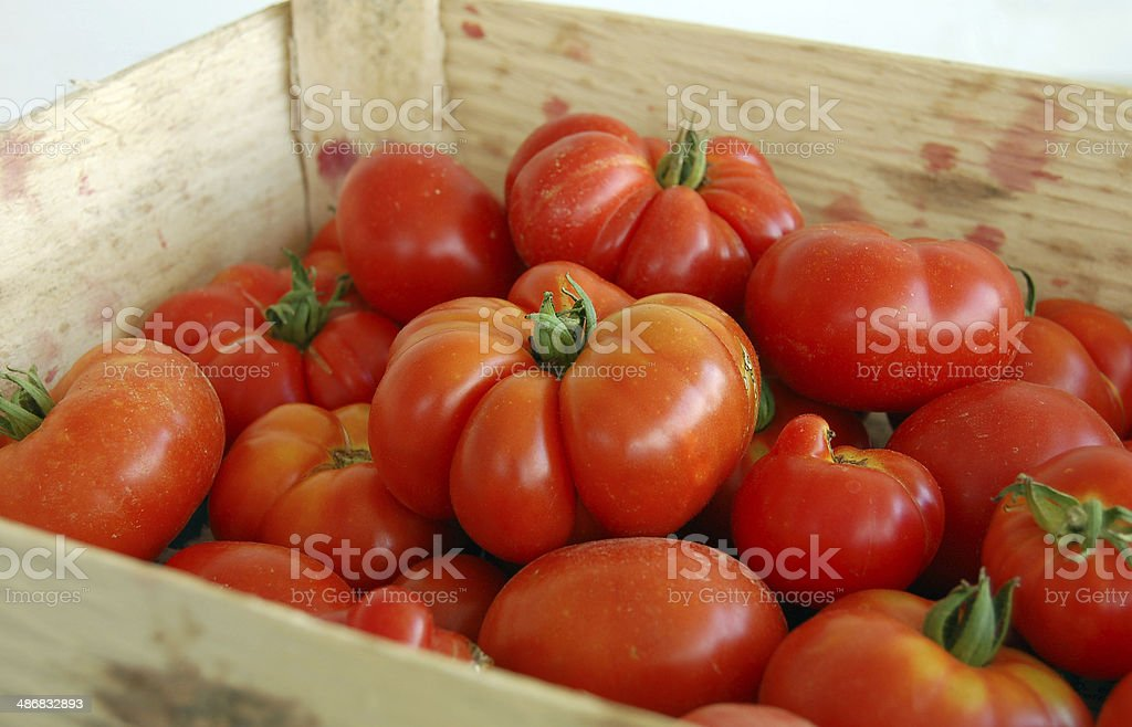 Slicing tomatoes in a basket stock photo