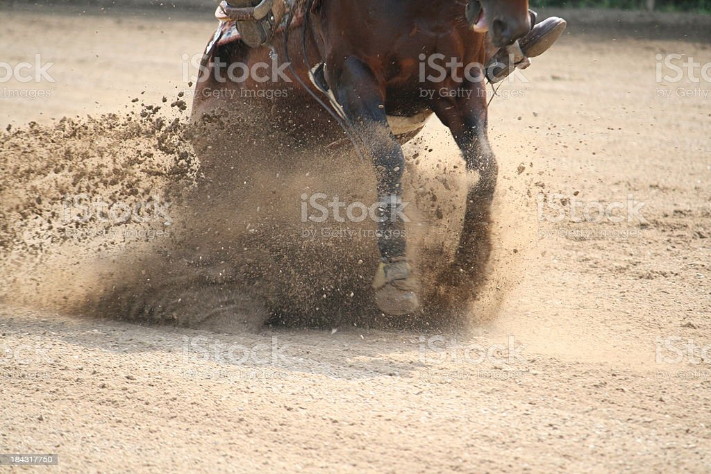 Sliding stop with quarter horse stock photo