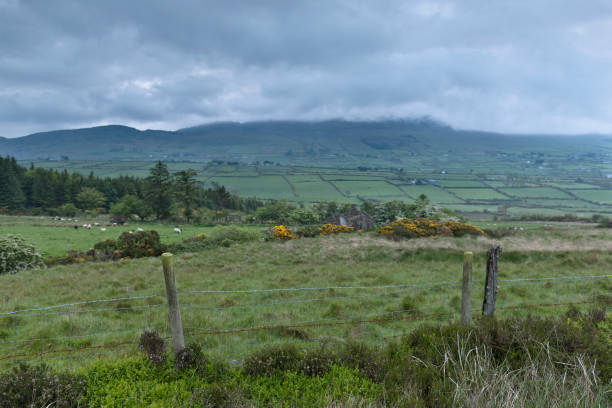 Slievenaglogh View, north northeast On the northeast slope of Slievenaglogh peak (Irish: Sliabh na gCloch) on the road from Mullaghattin Townland to Riverstown.  Here we look northeast from the Slievenaglogh Townland toward the valley between Slieve Foy and Slievenaglogh peaks.  The view includes Little River, Castletown River, Ballycoly and Glenmore Townlands.  Adjacent is a sheep pasture with a farm ruin behind the yellow flowered gorse (Whin bush, scientific name Ulex).  Slieve Foy is the far ridge lost in clouds.  Early morning, late May 2014. michael stephen wills Slievenaglogh stock pictures, royalty-free photos & images
