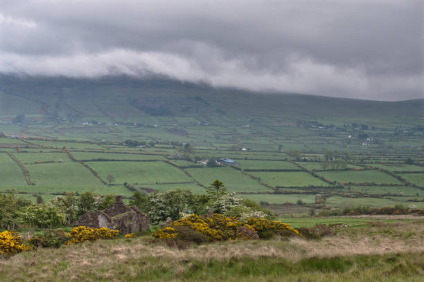 Slievenaglogh View, northeast On the northeast slope of Slievenaglogh peak (Irish: Sliabh na gCloch) on the road from Mullaghattin Townland to Riverstown.  Here we look northeast from the Slievenaglogh Townland over the valley between Slievenaglogh and Slieve Foy peaks.  The view includes Little River, Castletown River, Ballycoly and Glenmore Townlands.  Adjacent is a sheep pasture with a farm ruin behind the yellow flowered gorse (Whin bush, scientific name Ulex).  Slieve Foy is the far ridge lost in clouds.  Early morning, late May 2014. michael stephen wills Slievenaglogh stock pictures, royalty-free photos & images