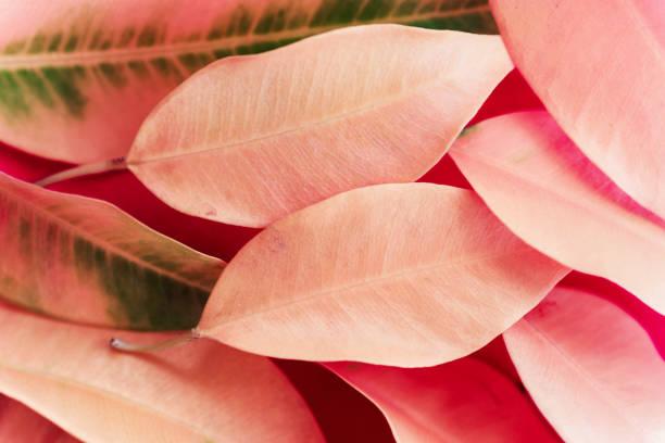 Leicht verschwommenen herbstlichen Hintergrunds. Haufen heller peachy rosa Baumblätter mit grünen Adern. Schöne Blätterung. Entwurfsvorlage mit Kopierraum – Foto