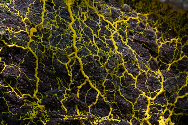 Slime mold stock photo
