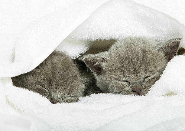 Slipping kittens stock photo