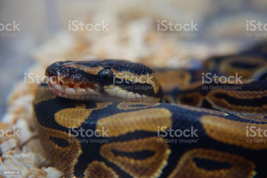 Slithering Snake – Foto