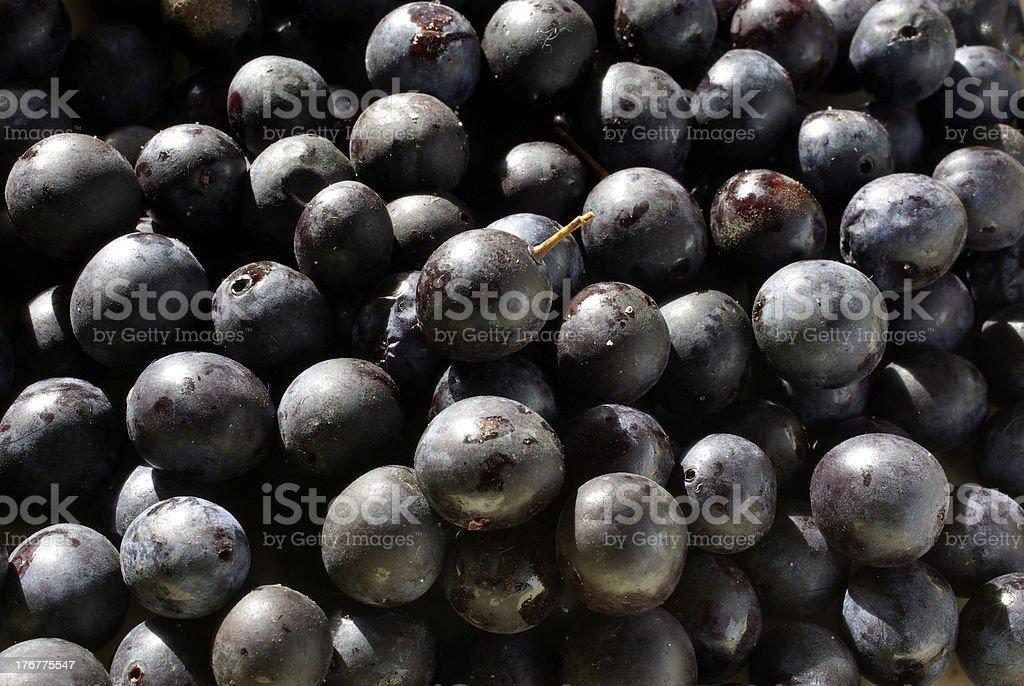 Sloe berries. royalty-free stock photo