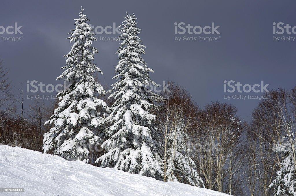 Slope mountain trees royalty-free stock photo