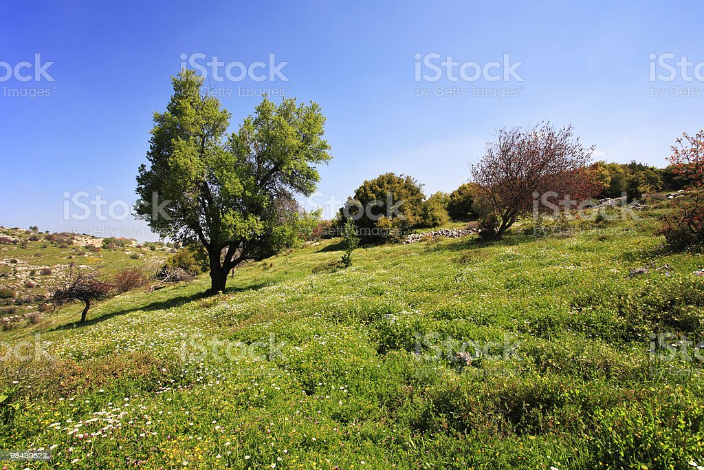 Slope of mountain Meron royalty-free stock photo