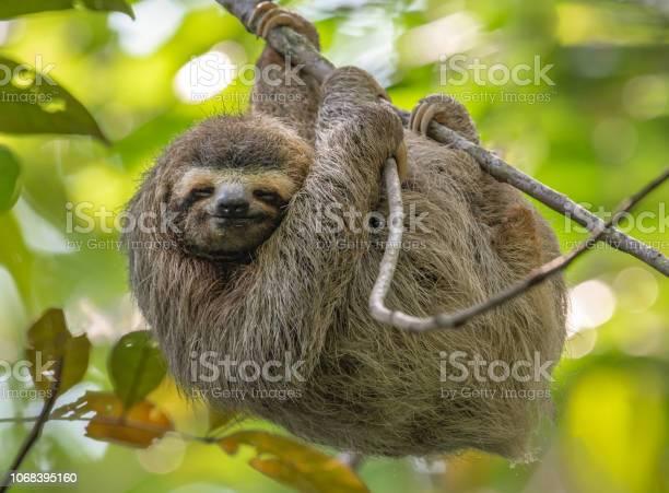 Sloth in costa rica picture id1068395160?b=1&k=6&m=1068395160&s=612x612&h=r0diwucrhjo9e6 xrvtih7zzo3prlsu7sdxw6vrvcpg=