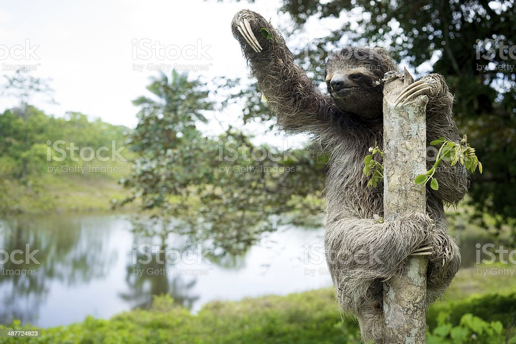 Sloth in the Jungle stock photo