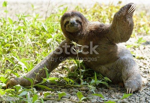 Three-toed sloth sitting on ground