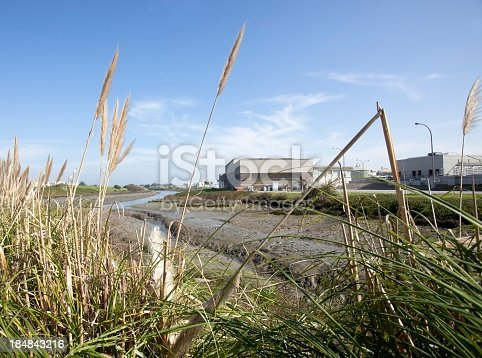 Low tide at the slough with pampas grass. Horizontal.