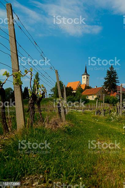 Slovenia, Jeruzalem, Vineyard in spring