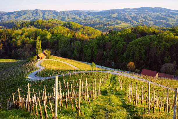 Slovenian heart shape wine road among vineyards in Slovenia stock photo