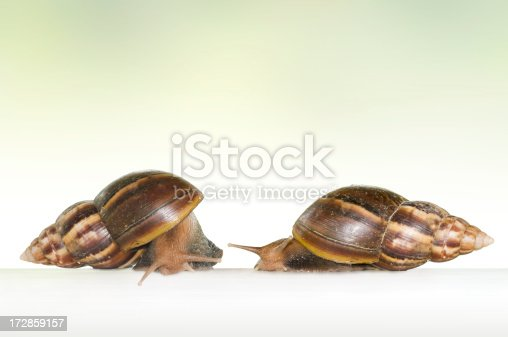 Two Isolated Snail on white background with a Clipping Path.