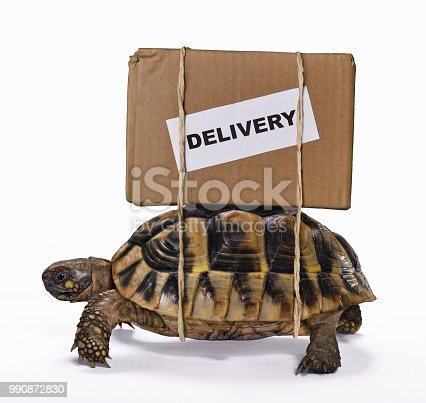 Delivery box on turtle