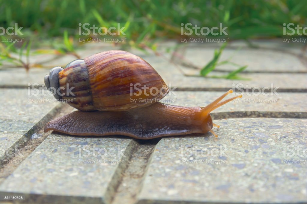 Slow life. Snail with it\'s broken shell crawling on the floor.
