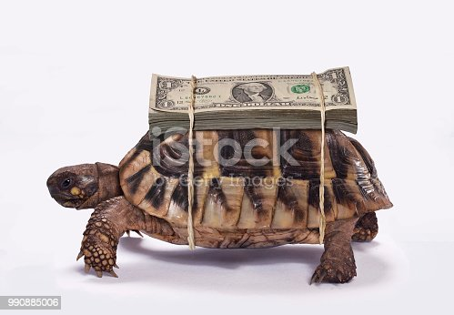 Dollar bills on turtle.