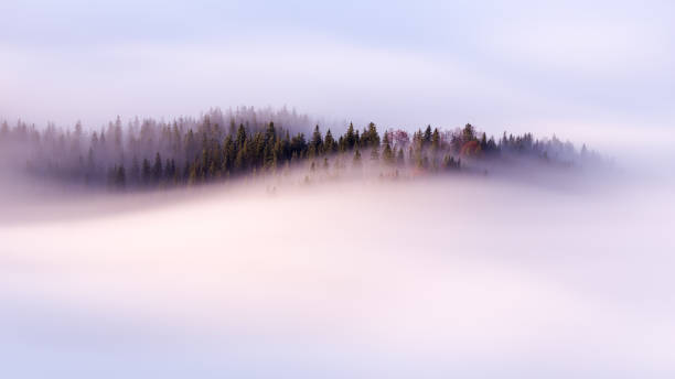 Slow moving clouds over the pine forest in the German alps Slow moving clouds over the pine forest in the German alps - long exposure trees in mist stock pictures, royalty-free photos & images