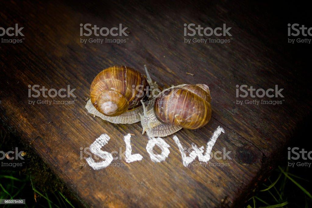 Slow Snails - Zbiór zdjęć royalty-free (Bez ludzi)
