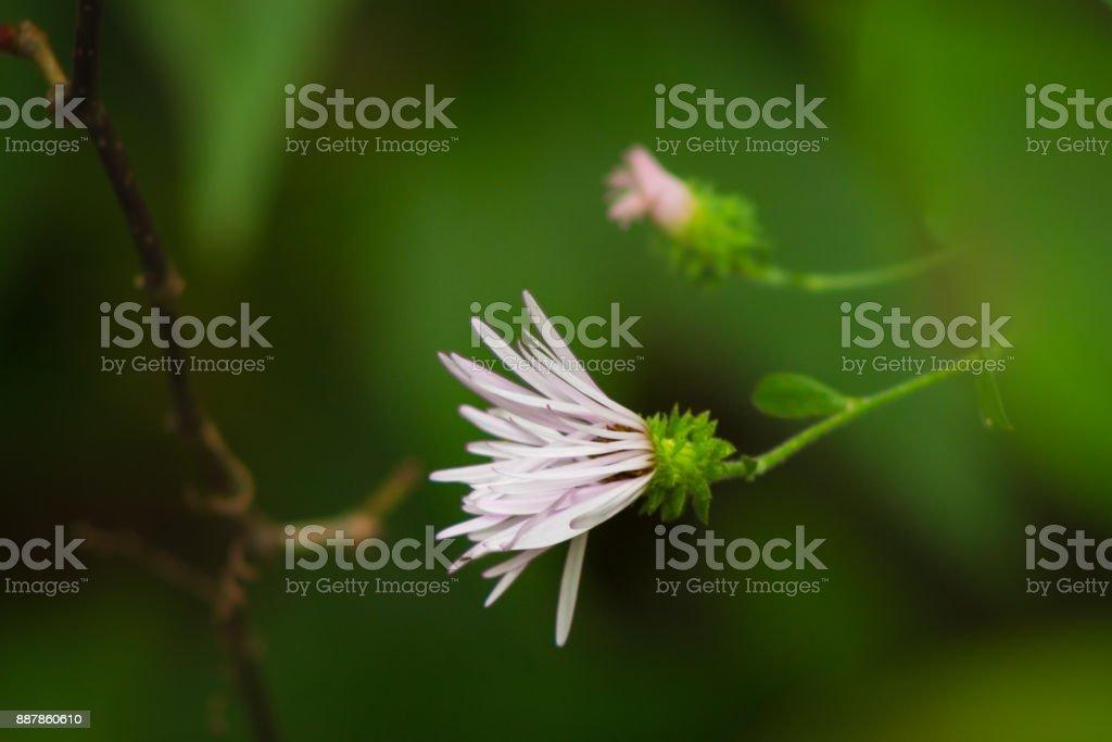 Slow to Bloom stock photo