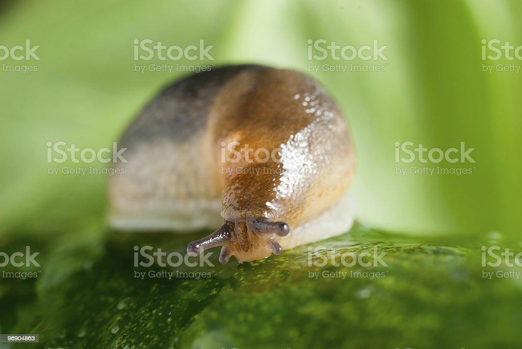 Slug creeps on a cucumber surface royalty-free stock photo