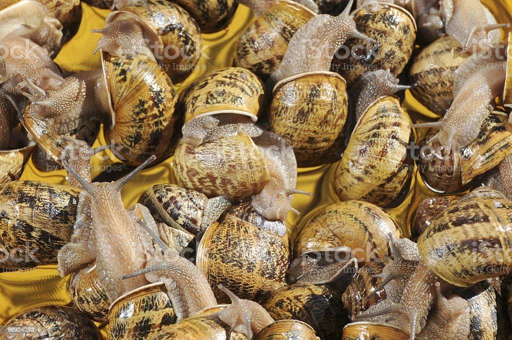 slugs royalty-free stock photo