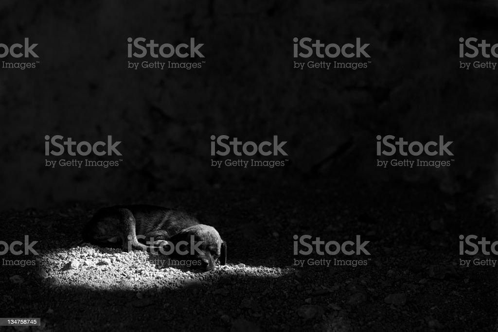 slum dog royalty-free stock photo