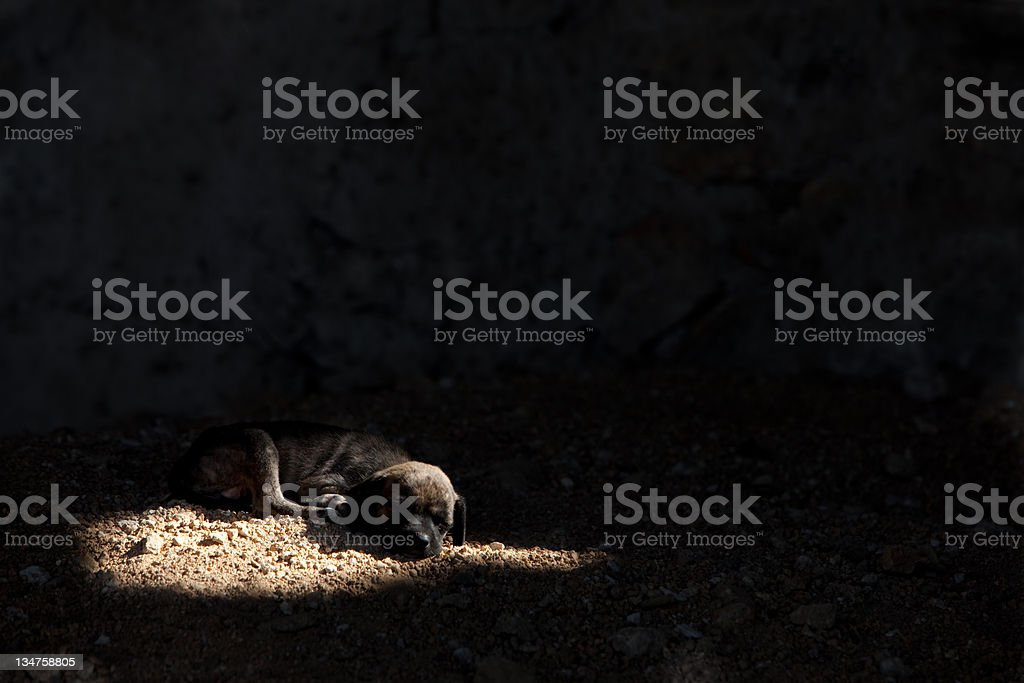 slum dog stock photo