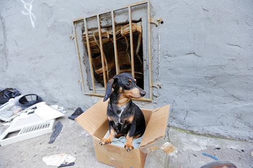 Small abandoned dog on grimy sidewalk