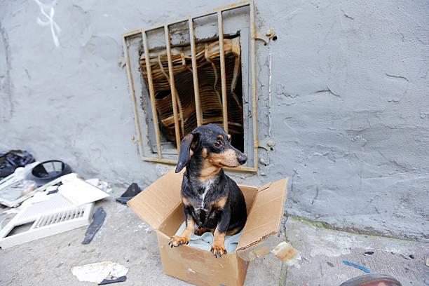 Small abandoned dog on grimy sidewalk stock photo