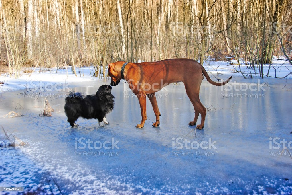Small and big dog stock photo
