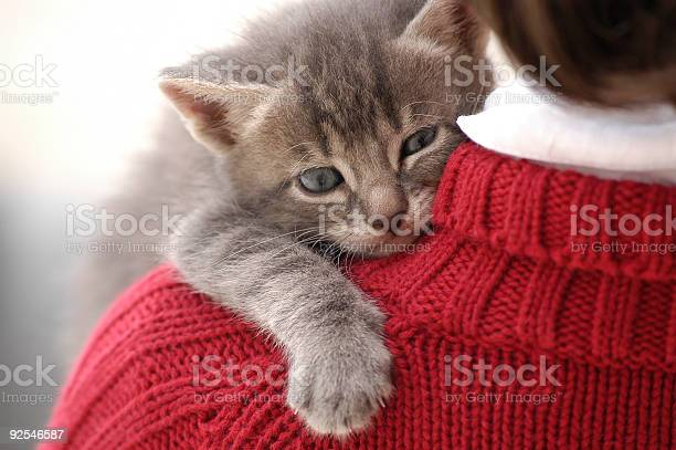 Small and cute kitten on little girl shoulder picture id92546587?b=1&k=6&m=92546587&s=612x612&h=yhwfkxlq 6fqatabhivze1pvq2embqnt0ypttegasni=