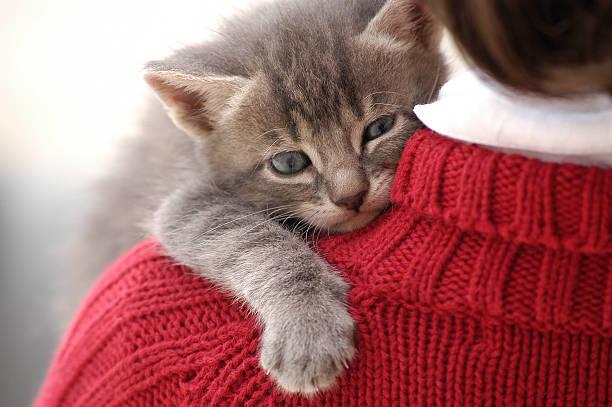 Small and cute kitten on little girl shoulder picture id92546587?b=1&k=6&m=92546587&s=612x612&w=0&h=zyyjsczdi0apts wpphqcnd o2 5ye3uufjidhqxu4m=