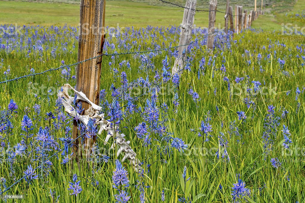small animal skeleton caught in a fence with wildflowers royalty-free stock photo